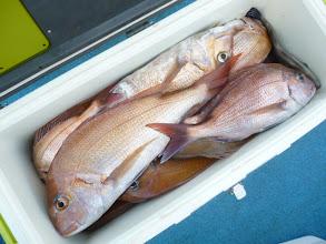 Photo: 本日の竿頭! タムラさん!真鯛18匹! ヤイトカツオに・・・。 さすがでした。