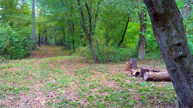 Photo: All trails are big enough to drive and lead to the creek surrounded by hardwoods