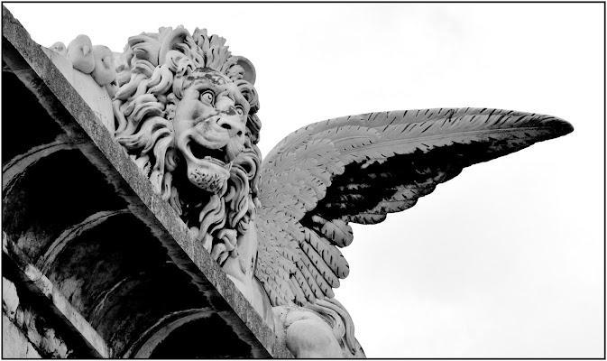 il leone di Emme Photo