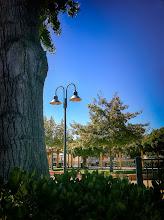 Photo: Lamp Post