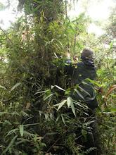 Photo: Darcy measuring a Weinmannia sapling.