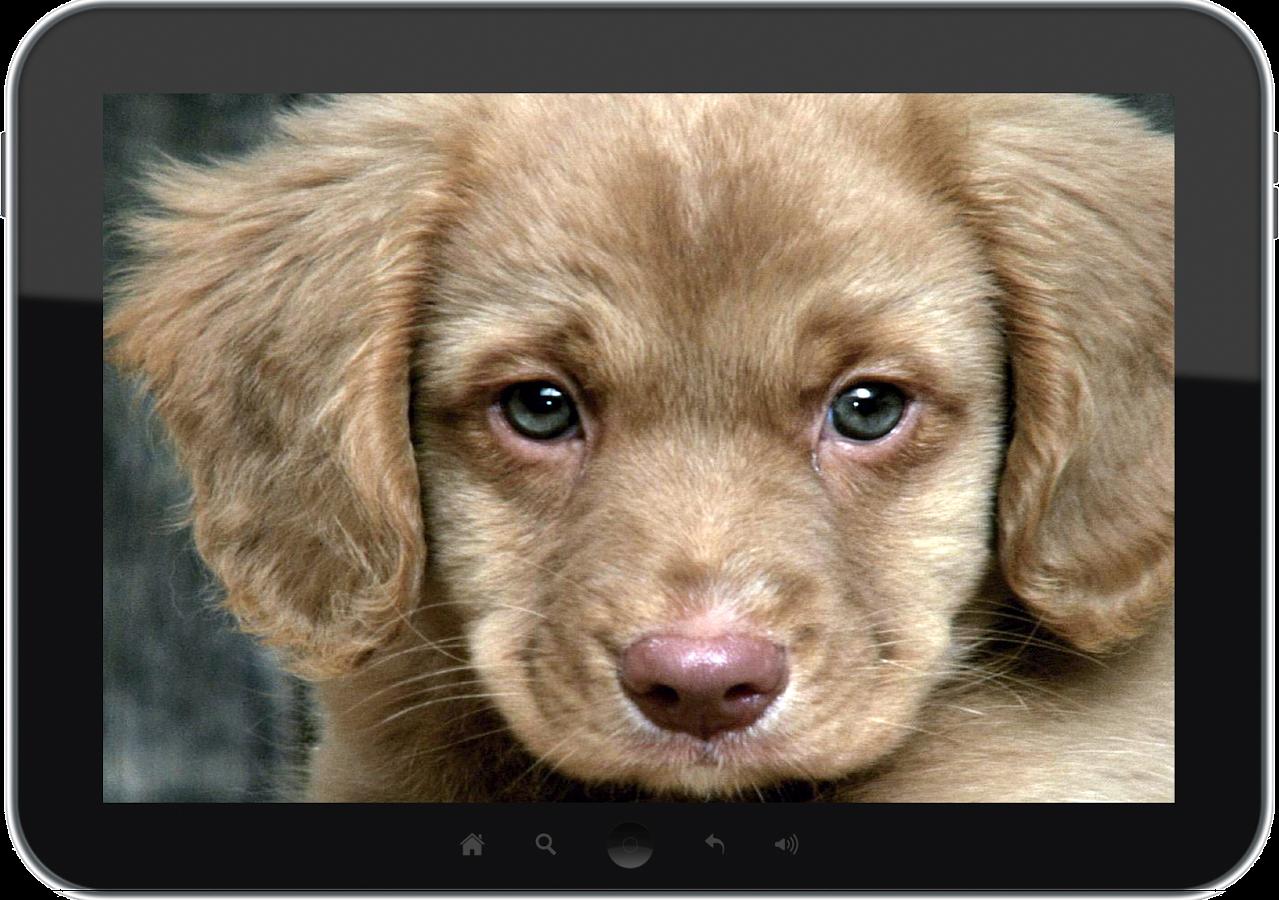 Anak Anjing Gambar Dinding Apl Android Di Google Play