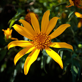 Yellow by Steve Hunt - Flowers Flowers in the Wild (  )