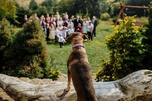 Wedding photographer Petr Wagenknecht (wagenknecht). Photo of 30.12.2018