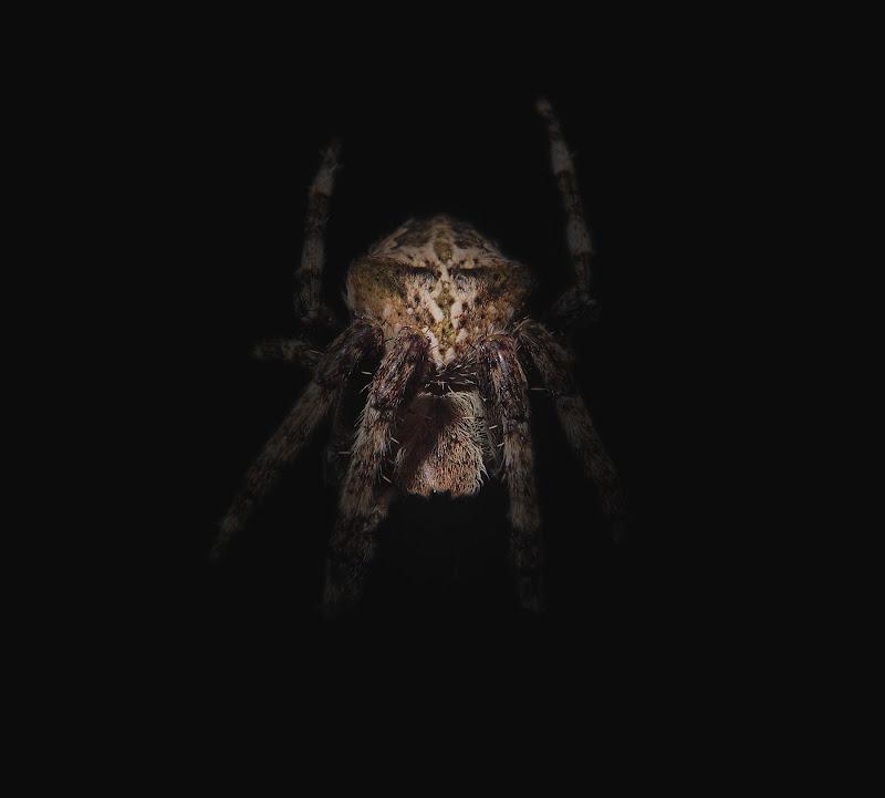 ragno porta guadagno di Sil-M