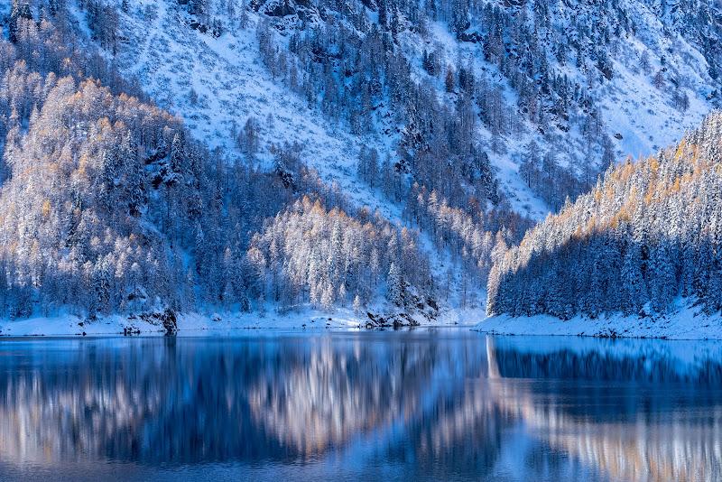Icewood. di Zarba