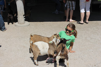 Photo: You can't see it, but Eva was holding a milk bottle.  These goats were hungry!