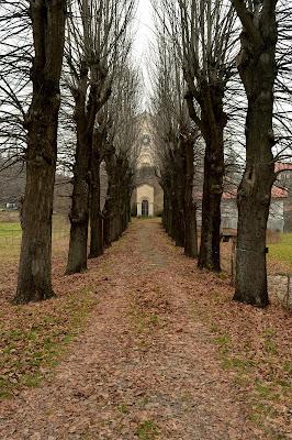 In fondo al viale, tra alberi spogli di mtan73