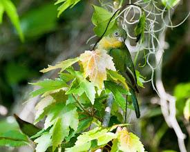 Photo: - Corkscrew Swamp Sanctuary