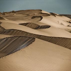 by Pat Kiellor - Landscapes Deserts ( sand, desert, dune )