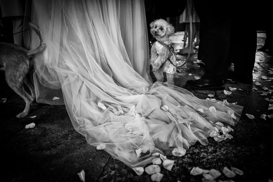 Wedding photographer Barbara Fabbri (fabbri). Photo of 11.11.2019