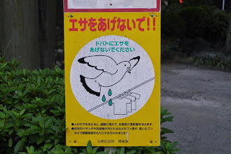 Photo: Don't feed the pigeons! (Because if you do they will poop on people's laundry)
