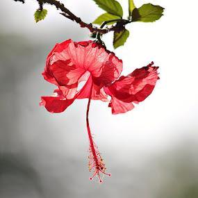 by Vijayendra Desai - Nature Up Close Flowers - 2011-2013