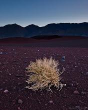 Photo: Lone bush in a harsh landscape
