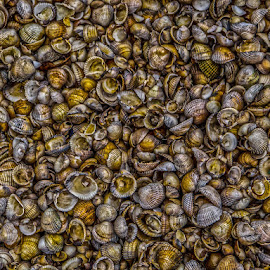 Shell shocked by Andrew Lancaster - Nature Up Close Other Natural Objects ( macro, seaside, natural, shells, nature, water, sea,  )