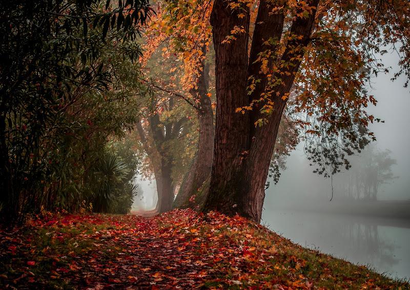 Sentiero nebbioso di Ione