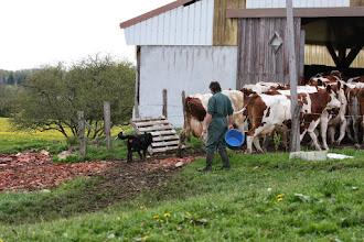 Foto: Vulcain, Alain en de koeien