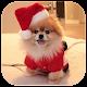 Fondos de Pantalla Navidad Download on Windows