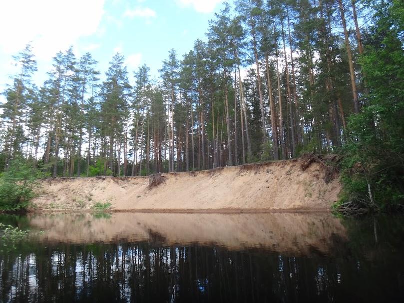 сосновые леса после Езерища