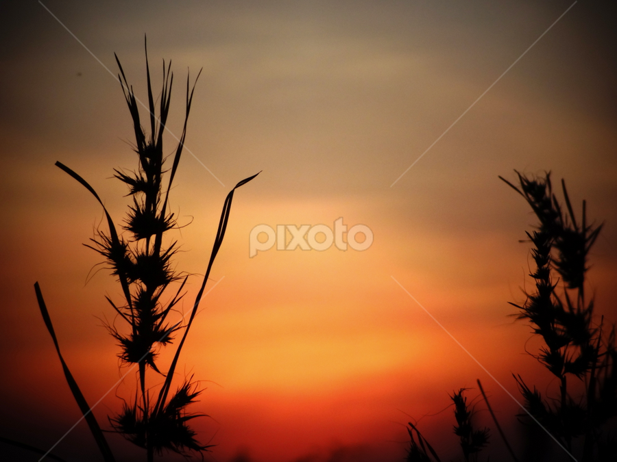 by Jaspreet Randhawa - Landscapes Sunsets & Sunrises
