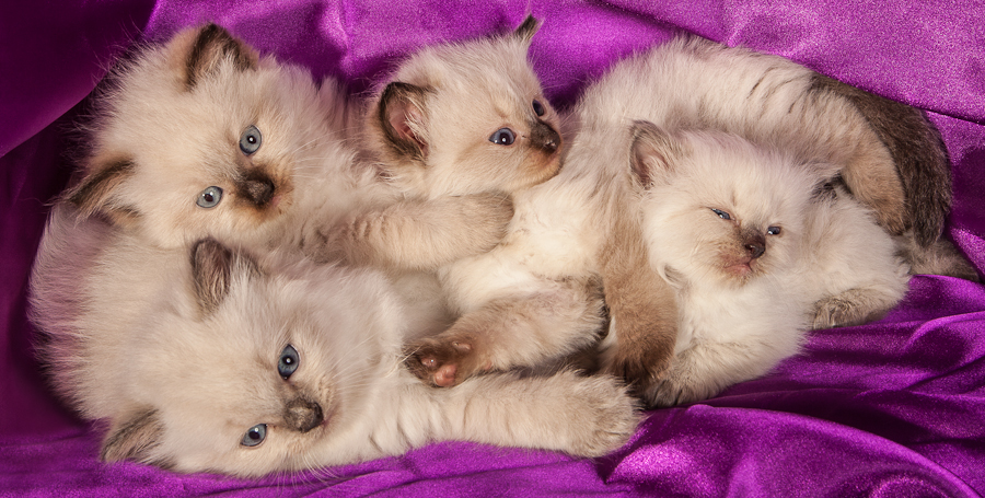 Fours a crowd by Matt Coggins - Animals - Cats Kittens