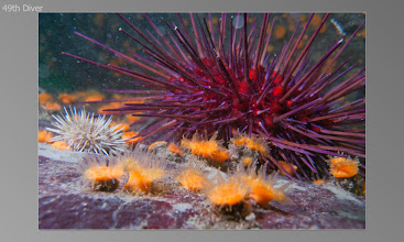 Photo: Green & Red Urchin, Orange cup coral