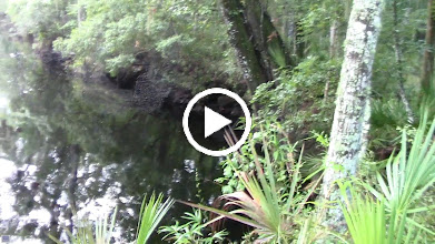 Video: Water does not look deep here but it really is.