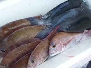 """Photo: これも""""佐賀のイノウエさん""""の釣果です! 良型の真鯛にクロも入りました!"""