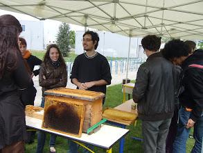 Photo: Atelier du vendredi, abeilles solitaires et abeilles coloniales