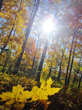 Photo: Small growing trees in the autumn woods at Hills and Dales Park in Dayton, Ohio.