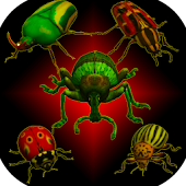 Real Bugs: Bettle Smasher 3D