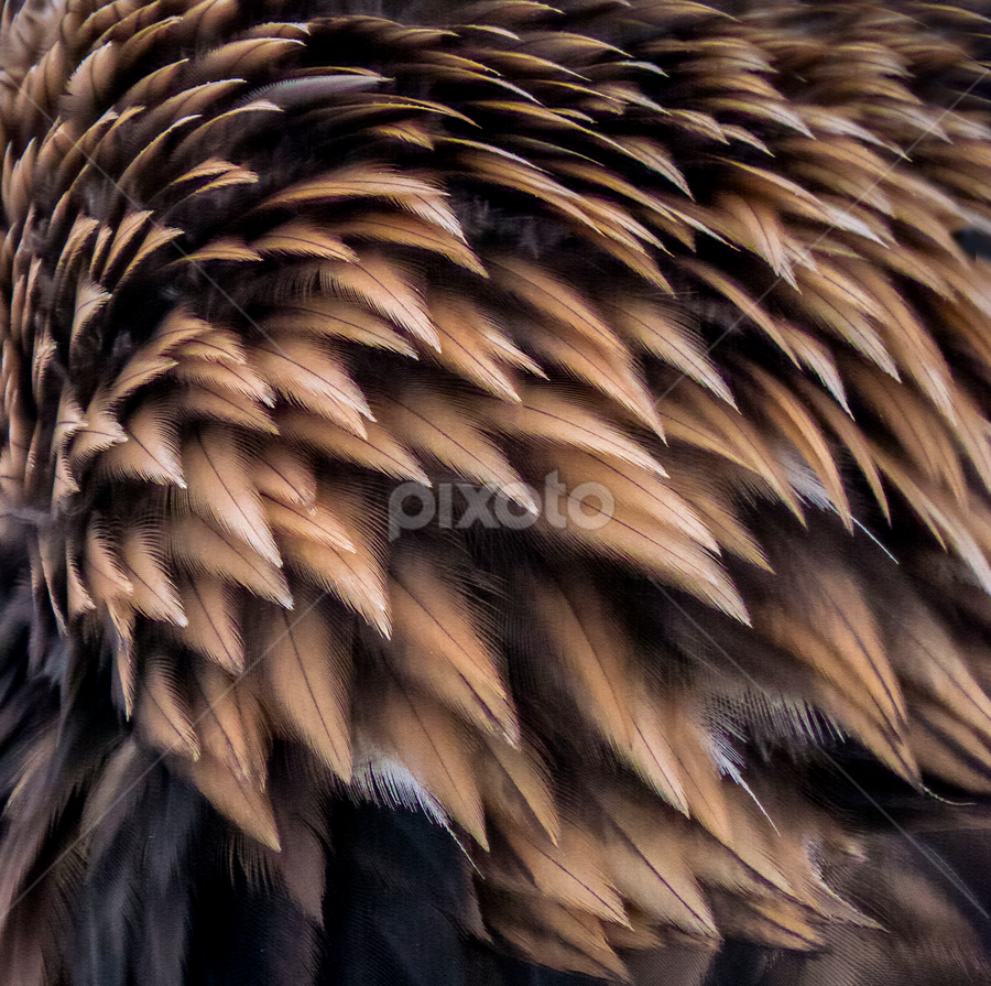 golden eagle feathers by Marianna Armata - Abstract Patterns ( bird, abstract, macro, eagle, pattern, marianna armata, feathers, golden,  )