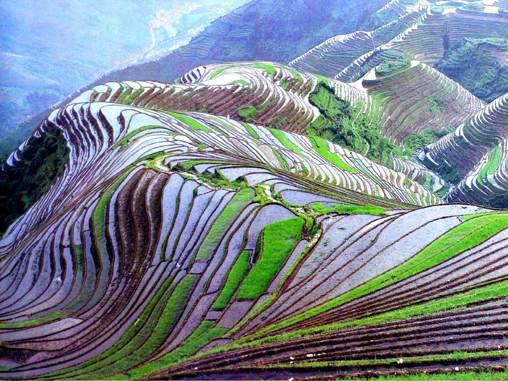 مصاطب الأرز المنحوتة باليد على المنحدرات. VudZHsf-UTj8cDO_5wdL