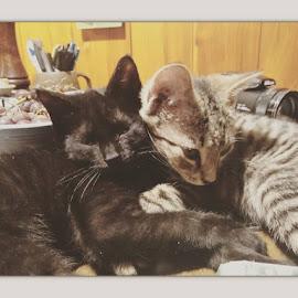 Lisette and Lester by Charlotte Burnett - Animals - Cats Kittens