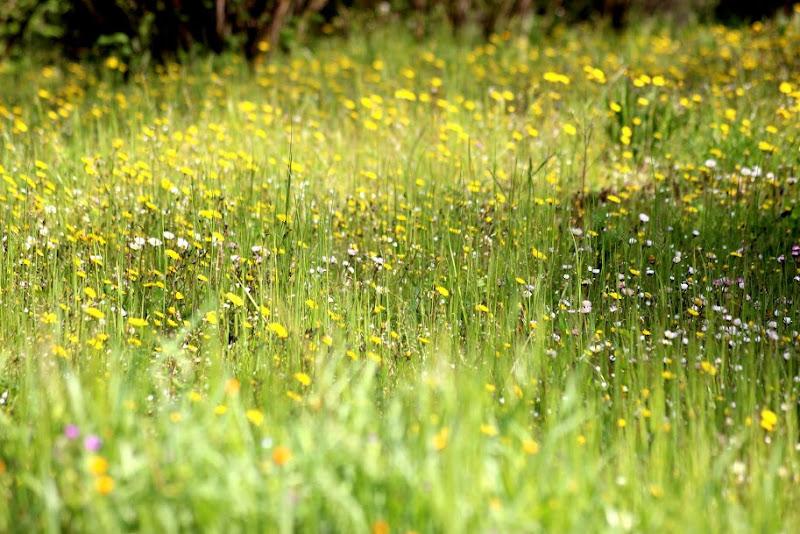 prato di primavera di elsa339