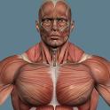 Мышцы человека icon