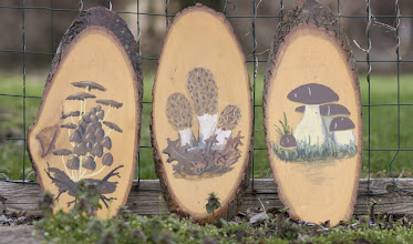 Photo: Mushroom paintings on wood by Dick Grimm. Photography by Alan McClelland.