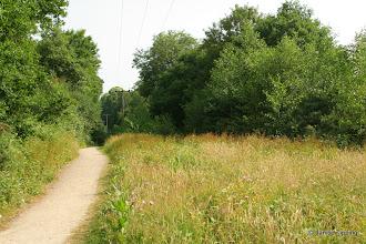 Photo: Railway Path full of wild flowers