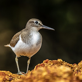 by Ralf  Harimau - Animals Birds