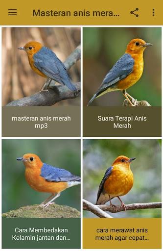 Download Suara Burung Anis Merah Terlengkap Offline Free For Android Suara Burung Anis Merah Terlengkap Offline Apk Download Steprimo Com