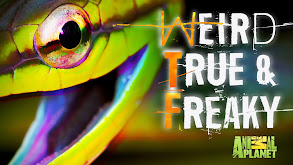 True Horror Stories thumbnail
