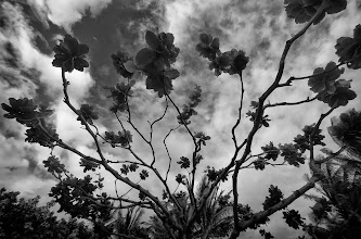 Photo: Tangled Up - © Ricardo Lagos - Creative Commons (CC BY-NC 3.0)