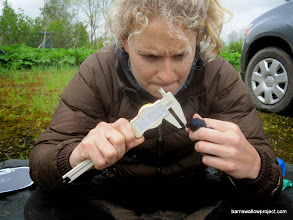 Photo: Liz shows extreme concentration while measuring bill length (they're tiny!)