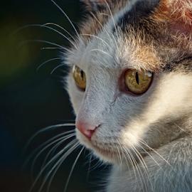 Ricki  by Todd Reynolds - Animals - Cats Portraits