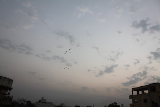 Photo: Birds flying over the evening sky in Akola, Maharashtra. 13th December updated -http://jp.asksiddhi.in/daily_detail.php?id=391