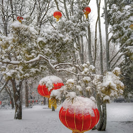 Chilly red lanterns by Francisco Little - Instagram & Mobile Android ( red, china, snow, contrast, winter, lantern )