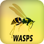 Wasps APK icon