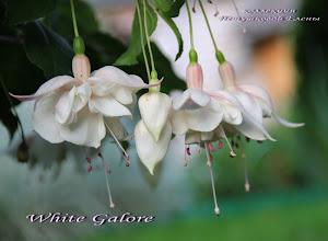 Photo: White Galore