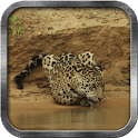 Wild Leopard Live Wallpaper icon