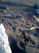Photo: Malia on the beach near Redwood National Park in northern California